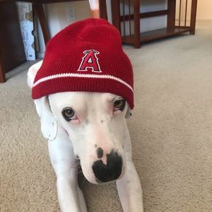 Angels Baseball Red Beanie